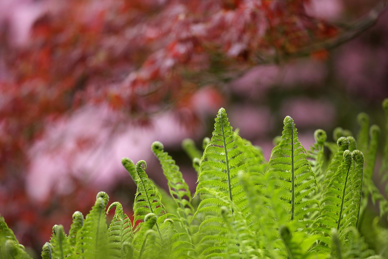 Ferns, Wakehurst Place