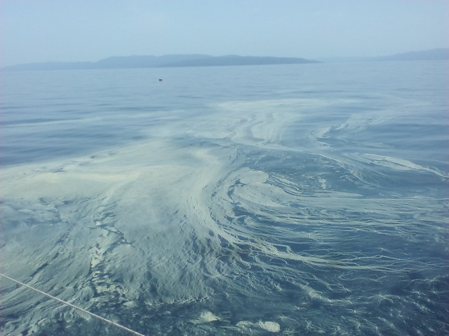 Pollen on the sea