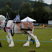 Clydesdale fancied up for Highland Games