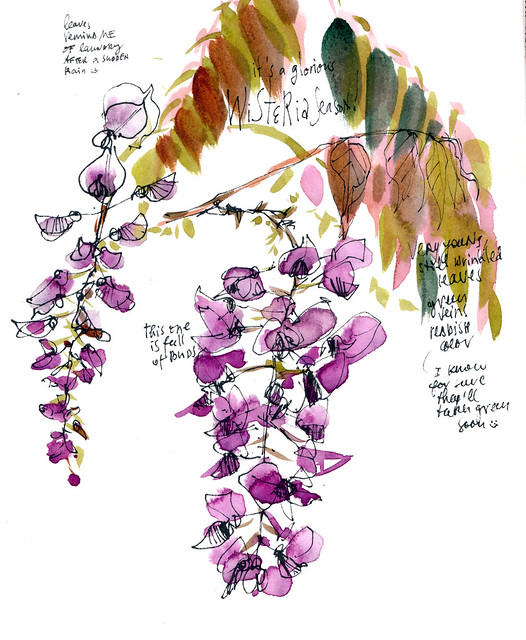 Sketchbook #113: Wisteria