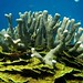 Corals © Charles Anderson
