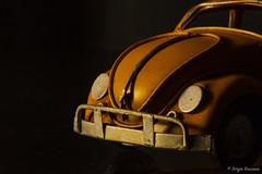 The Immortal Beetle