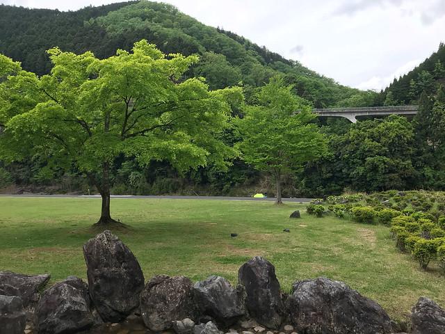 spring_hiyoshi_011