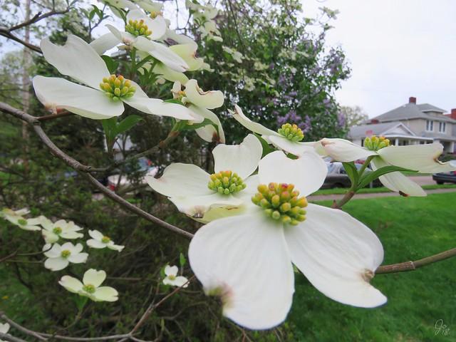 Warwood Spring