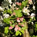 Blossom. 115/365