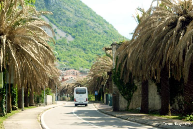 Автобус проезжает через Рисан