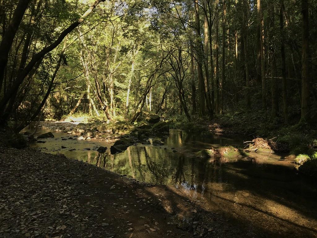 悠久の森の道中1