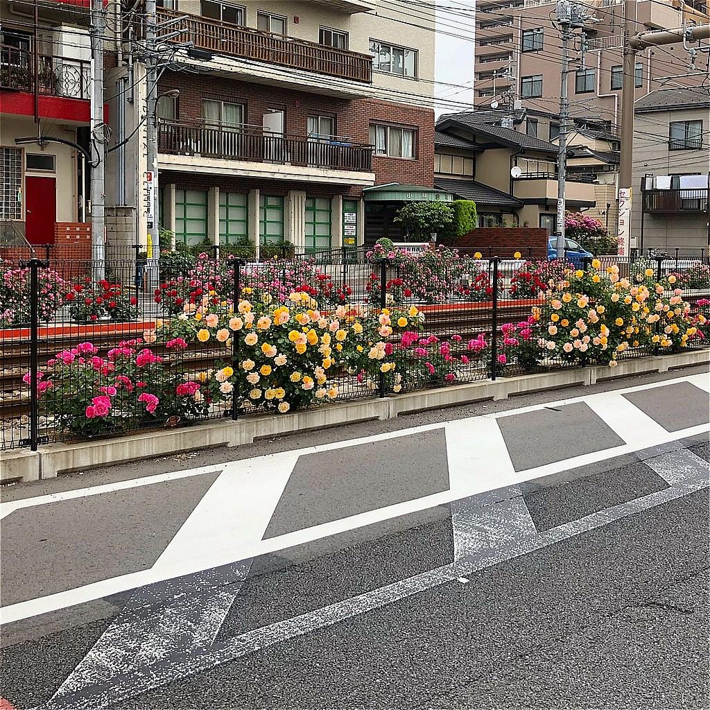 20180502_TokyoSakuraTram (22)