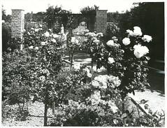 Rose Gardens, Palmerston North.