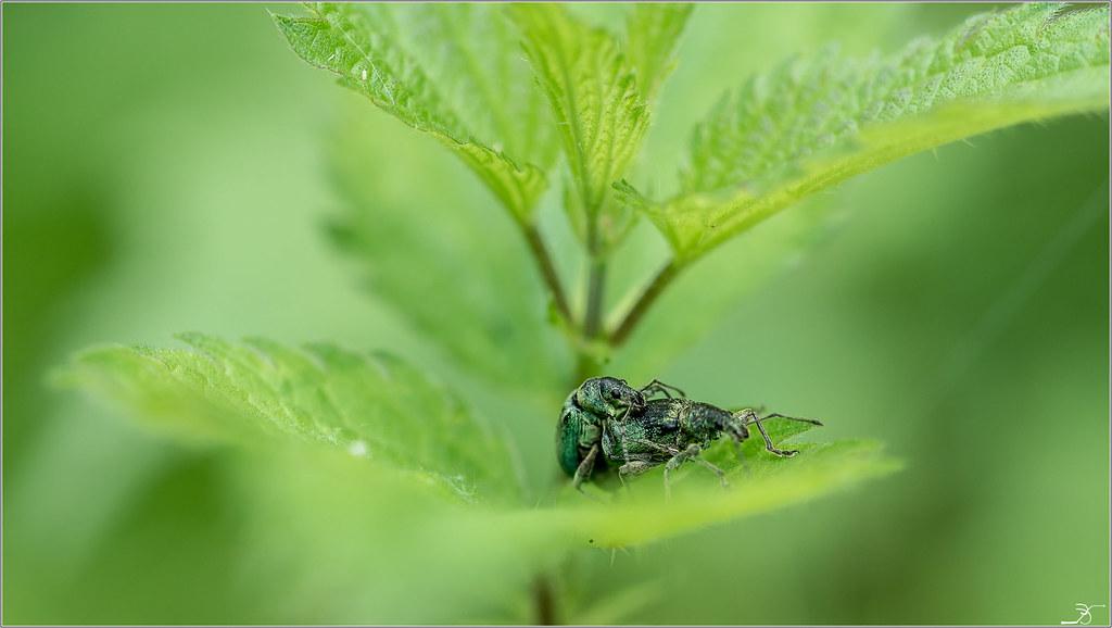 Envie d'insectes 42301397921_6143b46035_b
