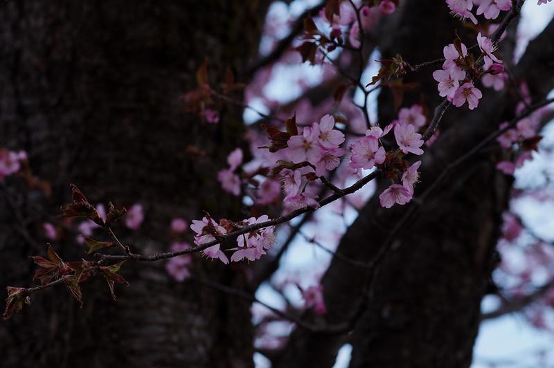 桜のある風景 #4_201804