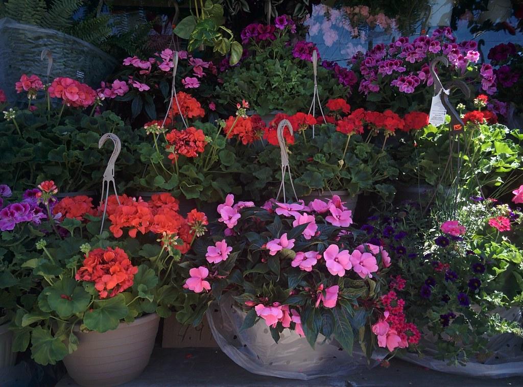 Flowers for hanging #toronto #dovercourtvillage #flowers #dovercourtroad #hallamstreet #latergram #77foodmarket