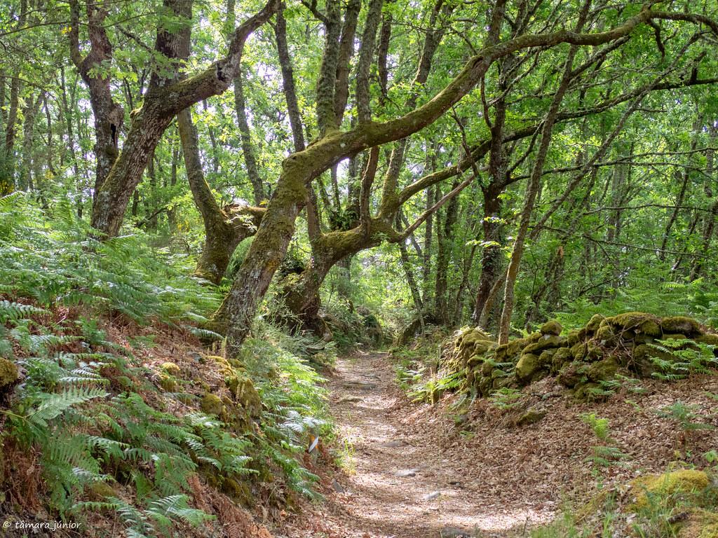14.- CPIS - 5ª etapa (Allariz-Ourense) (124)