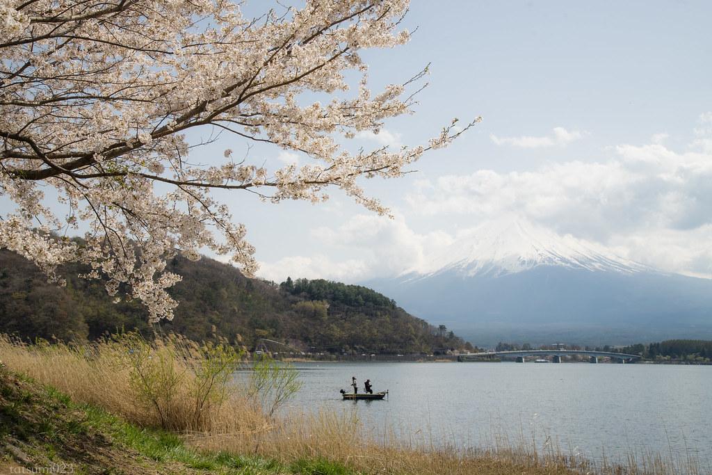 2018-04-13 河口湖の桜 001