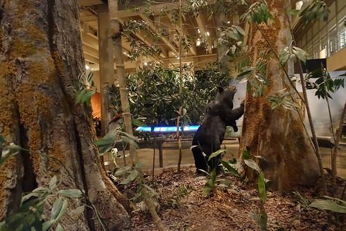 The Natural Environment, Hong Kong Museum of History. From History Comes Alive in Hong Kong