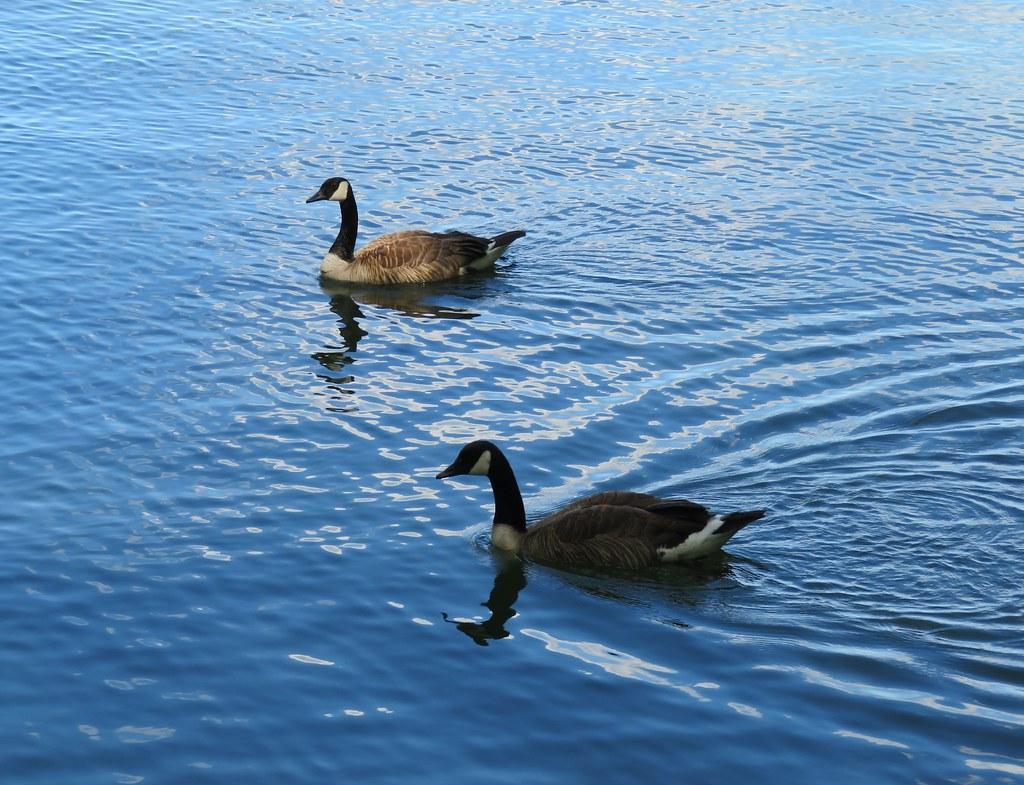 more photos 2da22 53787 Click This Site 65705 Canada Goose Outlet Usa - Articles ...