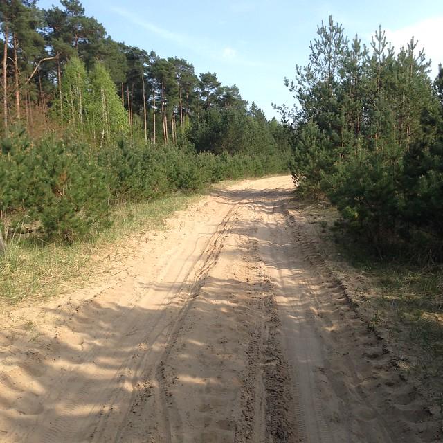 Ach, ach, eine Sanddüne mitten im Wald