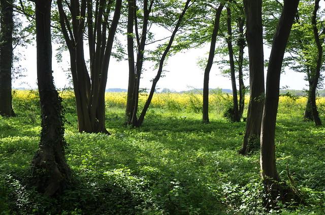 Loooking beyond the wood, Nikon D90, AF-S DX Zoom-Nikkor 18-70mm f/3.5-4.5G IF-ED
