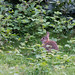 Bunny in Weald Country Park