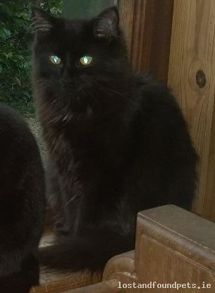 Fri, May 11th, 2018 Lost Male Cat - R749, Shillelagh  -  Tinahely, Wicklow