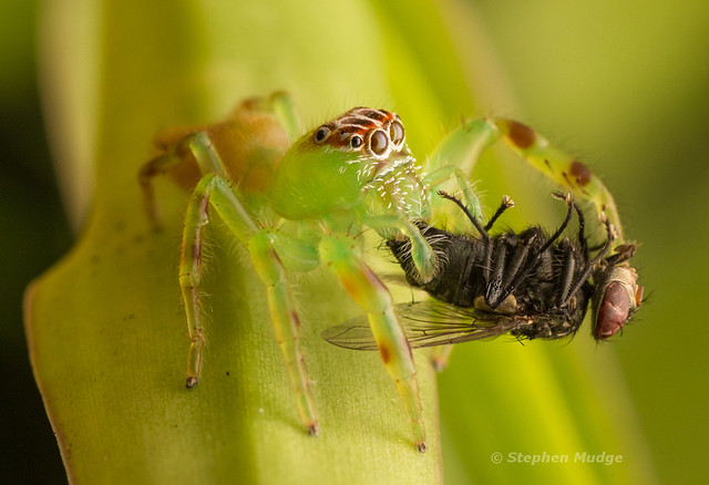 Green Jumper with Prey