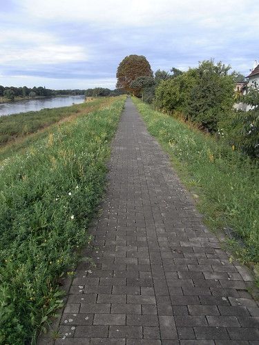20100827 027 0107 Jakobus Elbe Fluß Bäume Damm