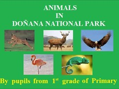 ANIMALS IN DOÑANA VIDEO