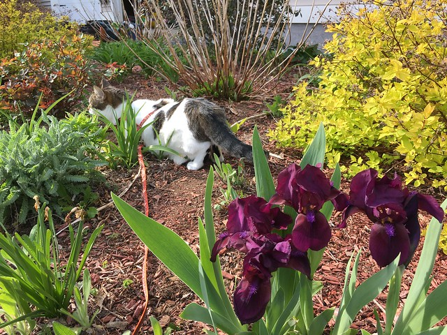 Penny in the front flower bed.