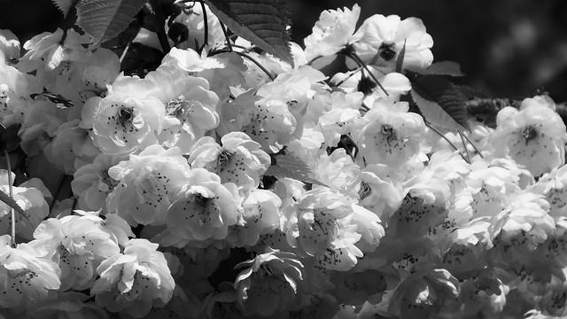 spring petals 01