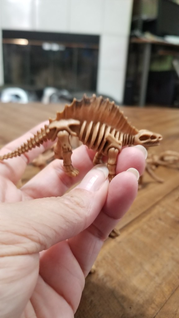 Direct Sales Support Center » A Look at Dinosaur Skeleton Dinosaur