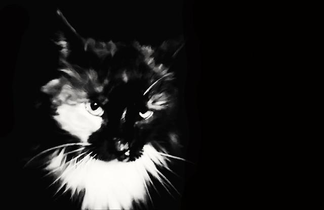 Midnight cat selfie