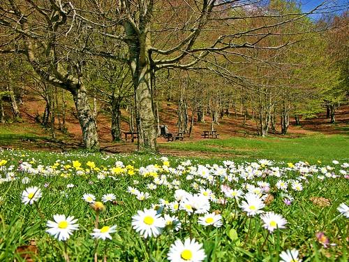 Nessun inverno dura per sempre, la primavera non salta mai il suo turno - No winter lasts forever, spring never skips his turn. (Hal Borland)