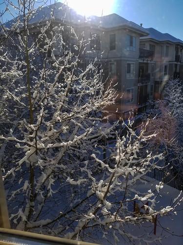 Snowy tree outside