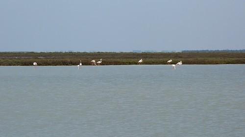 Parc naturel régional de Camargue - Saintes-Maries-de-la-Mer, France