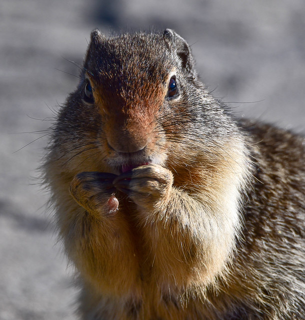 Squirrel with a Secret?