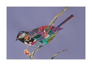 Bird #34