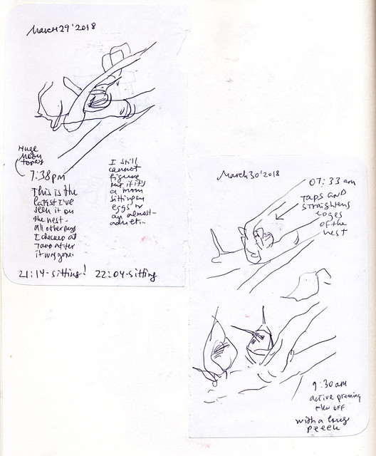Sketchbook #113: Hummingbird Nest