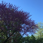 Beautiful spring day in Bronxville NY.