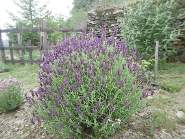 les jardins sont beaux en mai ! - Page 2 42053984562_8b27b9923f_z