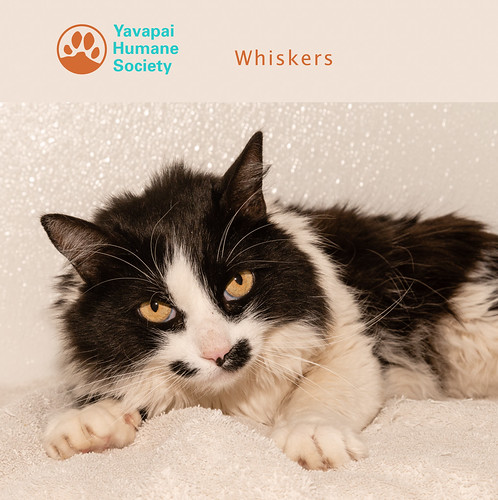 whiskers__yhs_logo_38348316-20180424-118