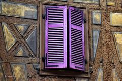 Windows & Doors