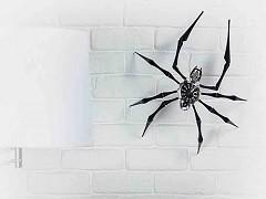 Clock Spider Huntsman Spider