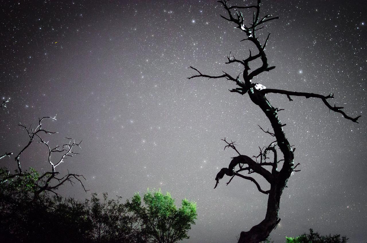 Una fotografía nocturna de un viejo árbol en las lagunas saladas del Chaco paraguayo, específicamente en el campamento Laguna Capitán. En el cielo, cientos de miles de estrellas dislumbran de una manera única, que no se puede experimentar desde las ciudades. (Elton Núñez).