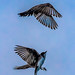 Bird Ballet by AaronP65 - Thnx for over 15 million views
