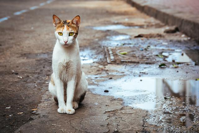 Cat @ Casablanca, Morocco