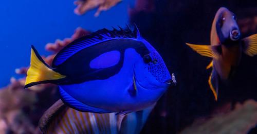 Aquarium Pala de Mallorca, Mallorca