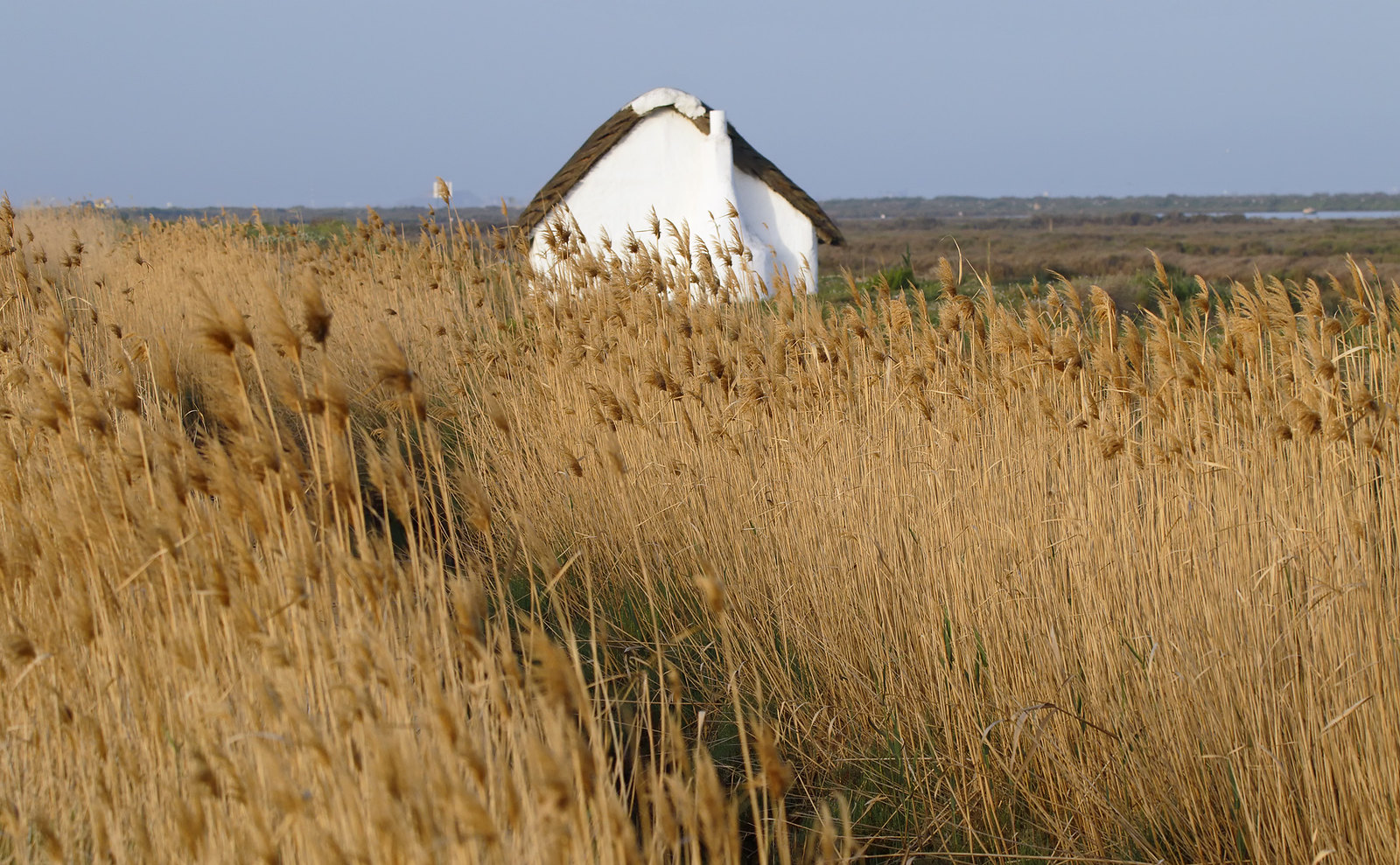 Building in reedbed - Ebro Delta