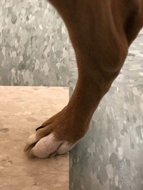 Woe Foot