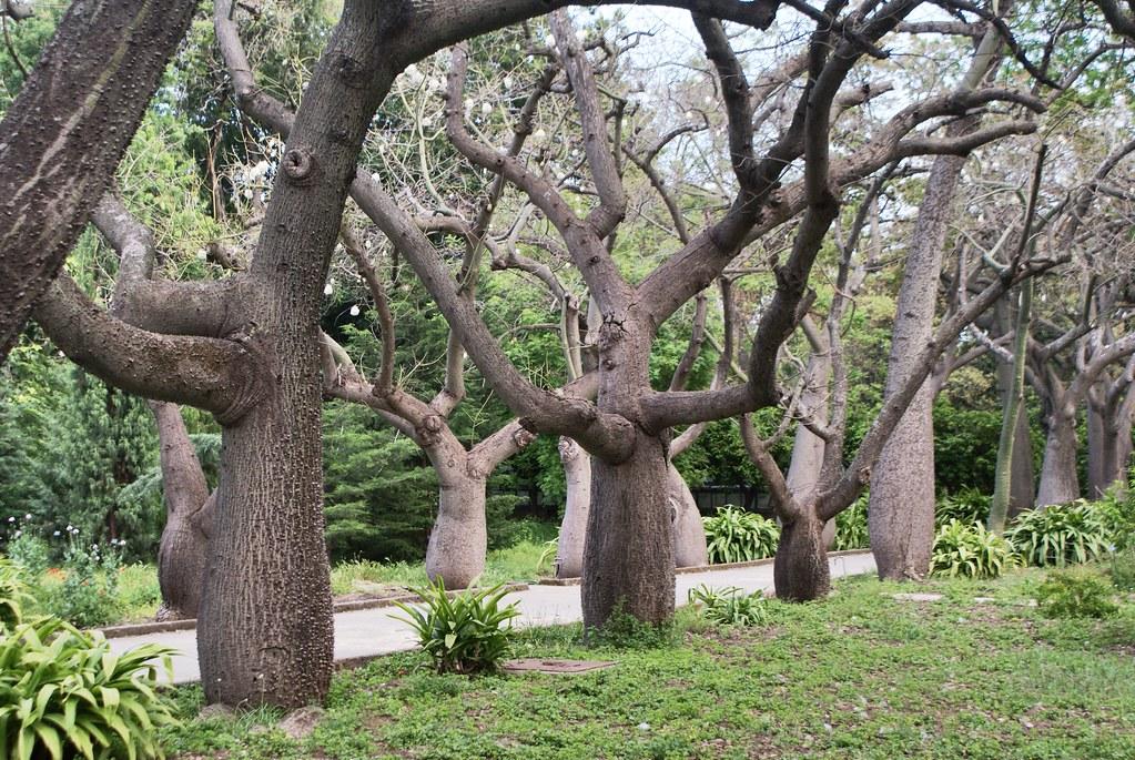> Au Jardin botanique de Palerme