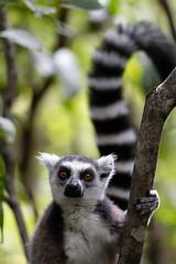 Madagascar 2018 - Camera II - 00752.jpg